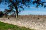 Montaria decorreu na Herdade da Torre Bela, na Azambuja