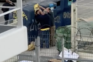 Vídeo de recém-nascido a ser retirado do lixo em Lisboa