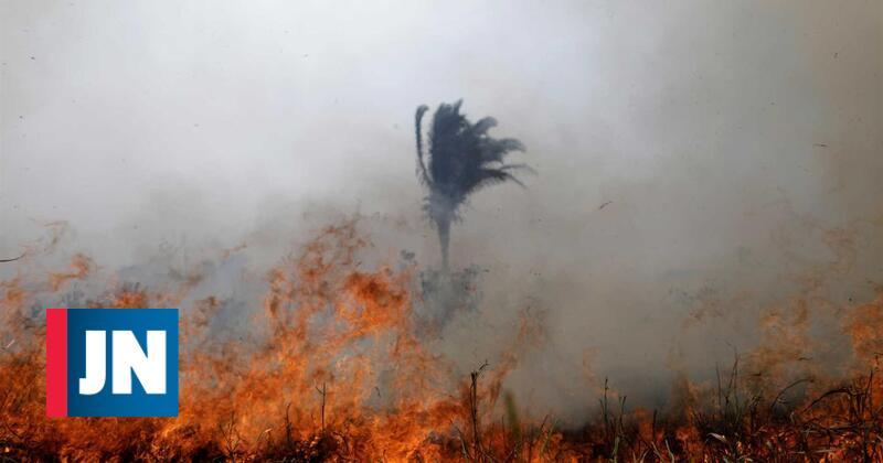 França propõe um fundo internacional para a Amazónia