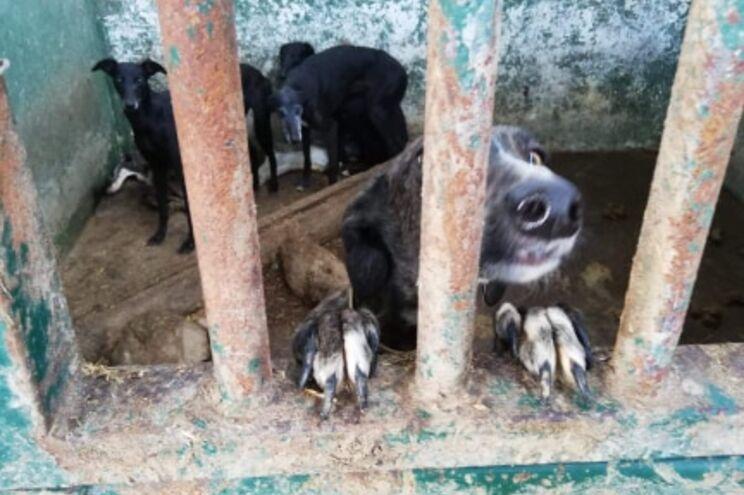 Imagens partilhadas nas redes sociais denunciam maus tratos a cães e cavalos na herdade de João Moura