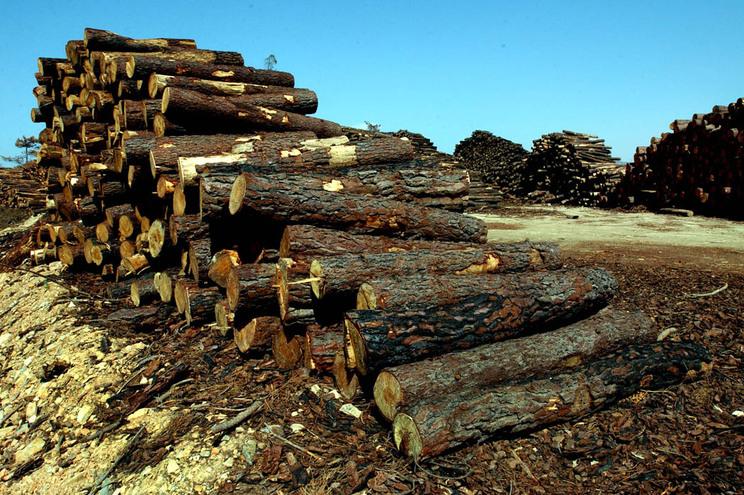 Do total de 114 lotes de madeira foram vendidos 52