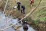 Bombeiros resgatam burro que caiu ao rio em Bragança