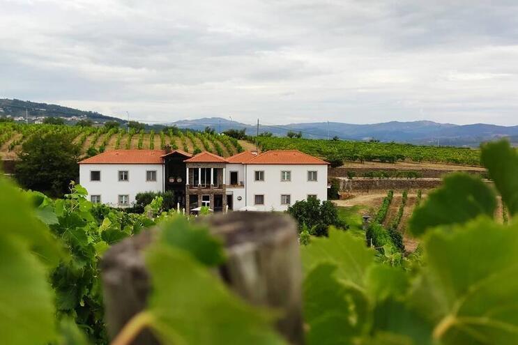 A Quinta do Portal é uma empresa que se dedica desde 1990 à produção de vinhos generosos e de mesa