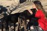 Alguns dos cães resgatados têm uma forte anemia