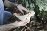 Miranda do Douro investe meio milhão em ecocentro para estudo de cogumelos