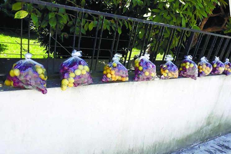 Oferece 200 quilos de fruta aos vizinhos para evitar desperdício