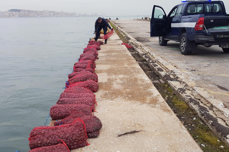 Carrinha estava carregada com cerca de 600 quilos de amêijoa-japonesa