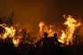Incêndios destruíram mais de 80% do Pinhal do Leiria