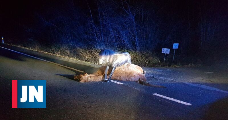 Impact of collision kills pregnant mare and causes foal to be born