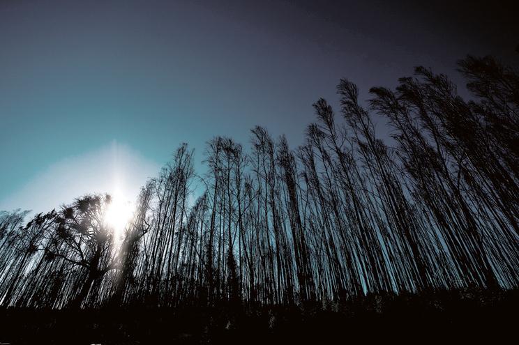 Floresta agrupada em ZIF ardeu mais do que a isolada