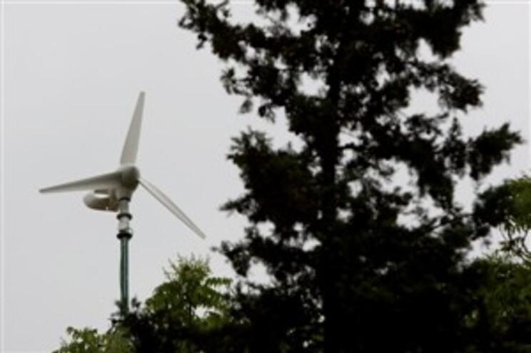 Turbinas eólicas retiram espaço de voo a aves migratórias
