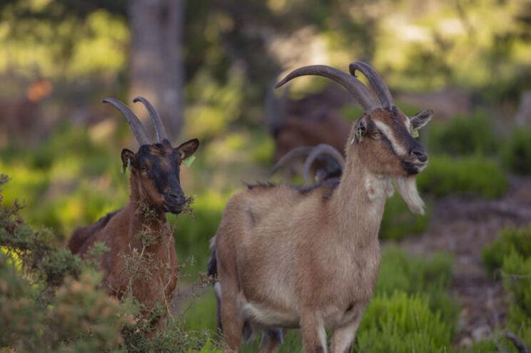 Iniciativa transfronteiriça é coordenada pela Associação Florestal e Ambiental de Vila Pouca de Aguiar
