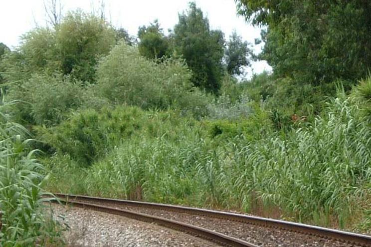 Linha do Oeste reaberta após acidente mortal no Bombarral