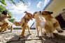 Dinamarca recebe cães rejeitados em Portugal