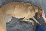 João Moura está indiciado por maus-tratos a animais. Foram resgatados 18 cães da raça Galgo