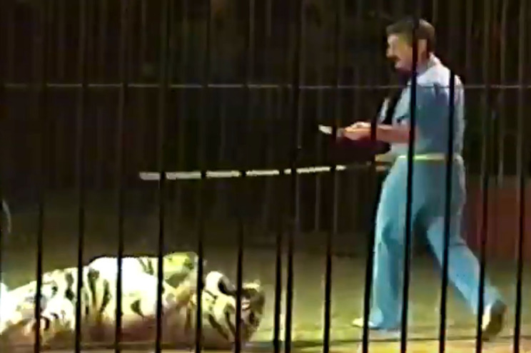 Domador devorado por quatro tigres durante ensaio