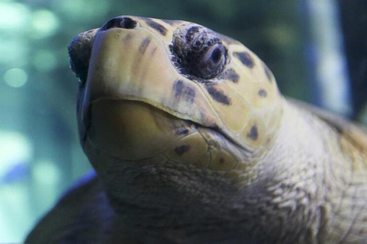 Animal foi eutanasiado por se tratar de uma espécie invasora