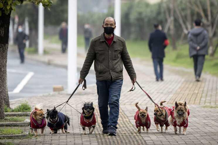 """China deixa de considerar cães e gatos como gado e diz que são """"companheiros"""""""