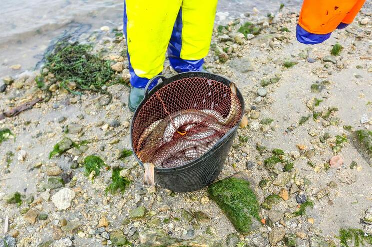 81e9ac894 PONG-Pesca | Plataforma de Organizações Não Governamentais ...