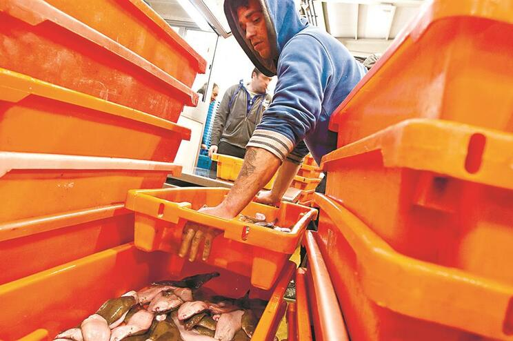 Pescadores contestam forma como dias em lota são contabilizados