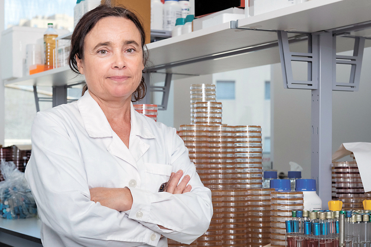 Paula Teixeira, investigadora do Centro de Biotecnologia e Química Fina da Universidade Católica, no