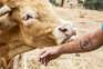 Maus-tratos a animais de pecuária nem para estatísticas contam