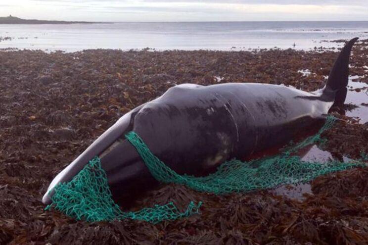 Baleia e feto morreram