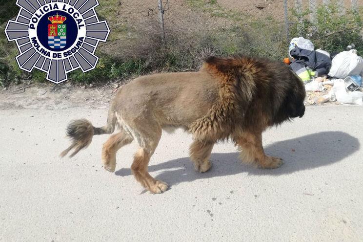 Animal andou à solta pelas ruas da cidade criando uma onda de pânico