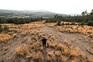Neste campo de Morgade, em Montalegre, vai nascer uma cratera a céu aberto