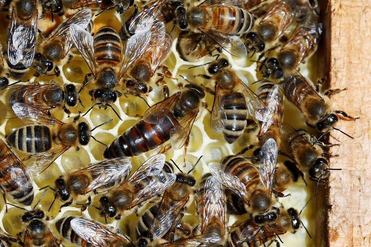 """O """"apocalipse"""" dos insetos que coloca em risco a vida na Terra"""