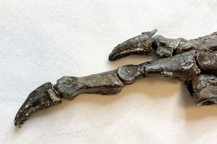 Detalhe do pé do fóssil descoberto em 2008
