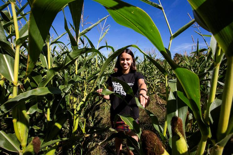 Cursos de agricultura atraem cada vez menos estudantes