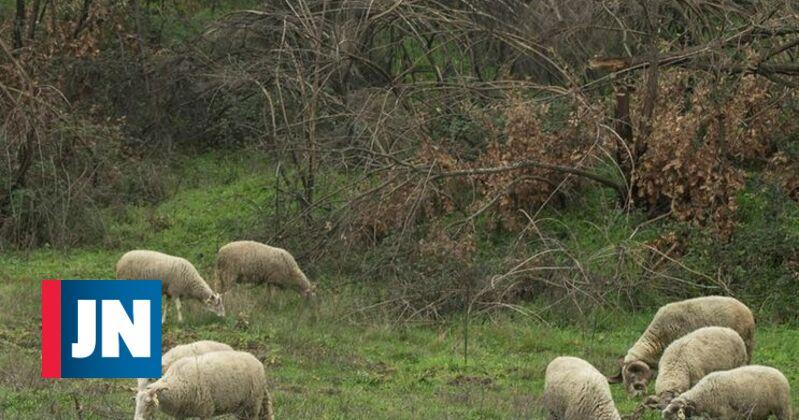 Escola de pastores da já tem 58 candidatos e arranca em setembro