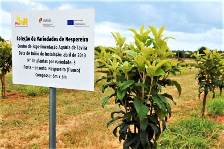 Movimento de cidadãos defende coleção de fruteiras de Tavira