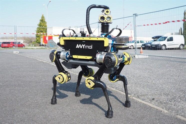 Veja como este cão-robô reage quando leva pontapés