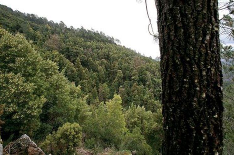 Florestas europeias estão a crescer
