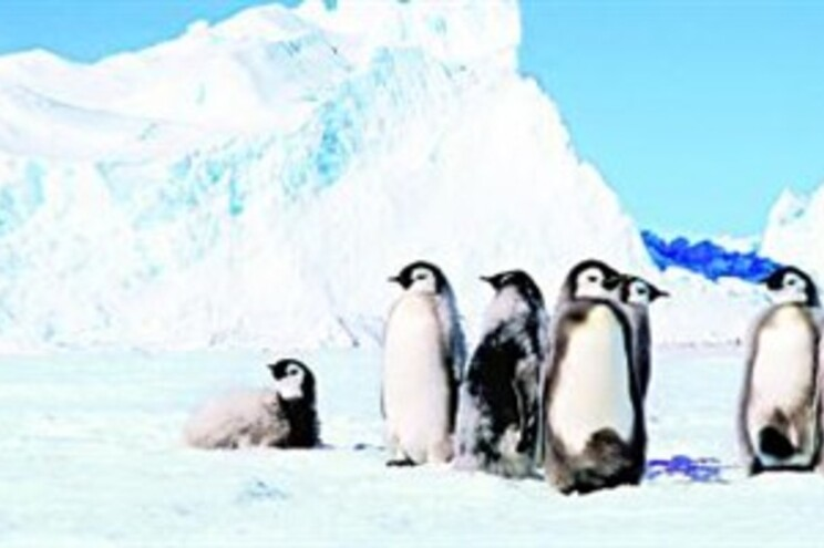 Zoo dá ovo para pinguins gays chocarem