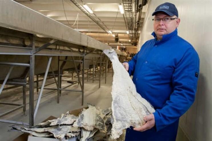 Fábrica do bacalhau Fjordlaks na cidade norueguesa de Alesund