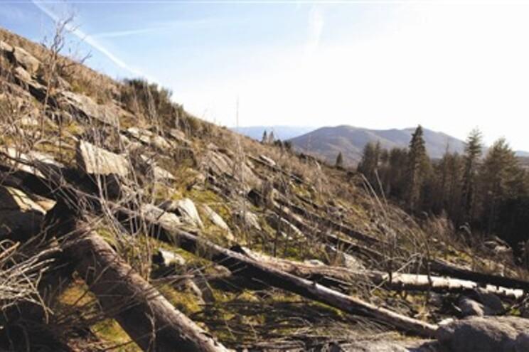 Autarcas reclamam reflorestação