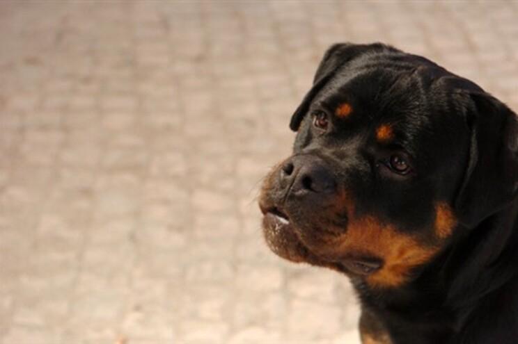 Inglês acusado de recensear o cão para votar