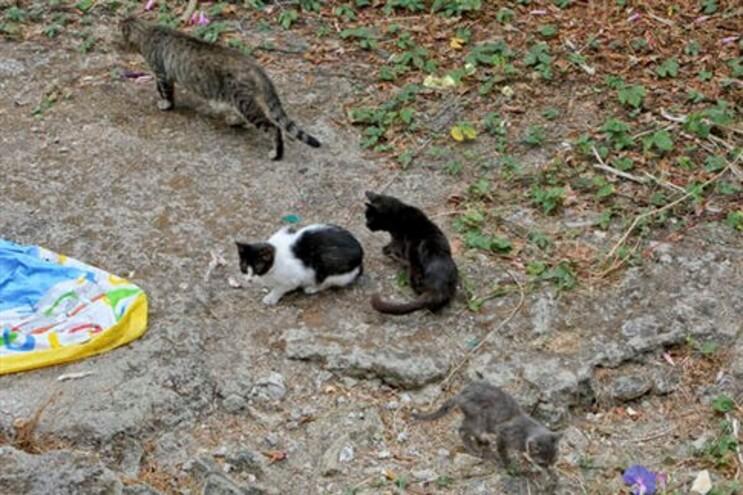 Ordem dos Veterinários alerta para campanha ilegal de esterilização de animais