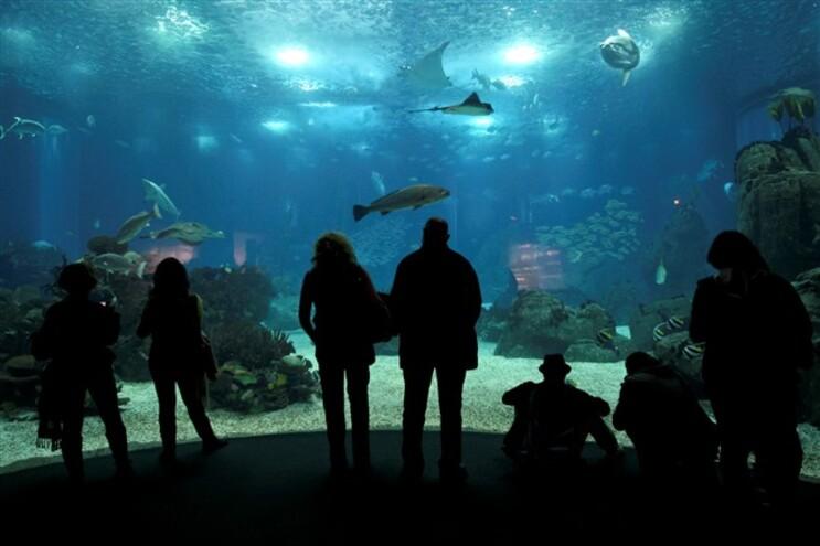 O plano de liquidação da Parque Expo terá de ser finalizado até ao próximo ano