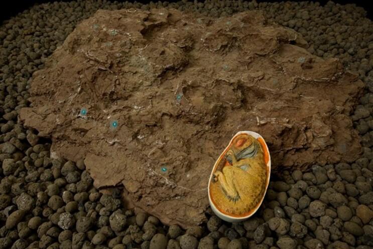 Uma série de ovos de dinossauro junto a uma réplica no Museu da Lourinhã