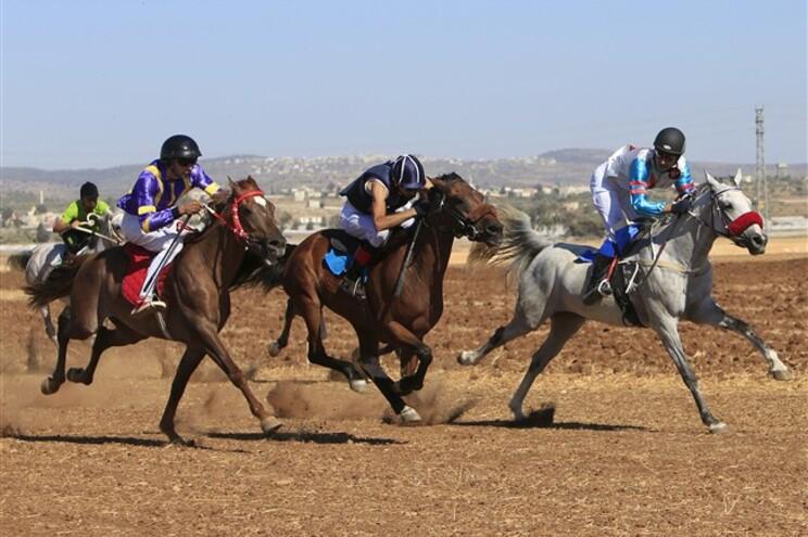Sorky era um cavalo de corridas e deu 24 troféus ao homem que o matou