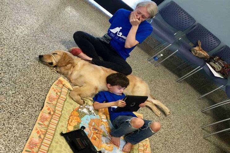 """Só um cão conseguiu a """"atenção"""" de uma criança autista"""