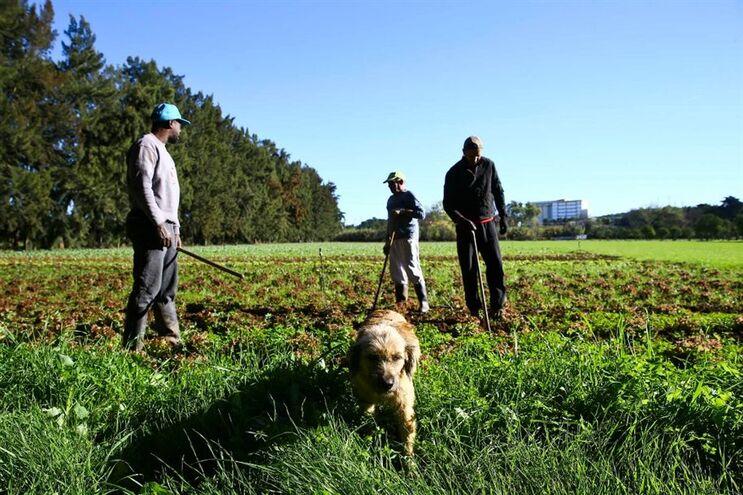 Reclusos de dez cadeias trabalham na agricultura e vendem para fora