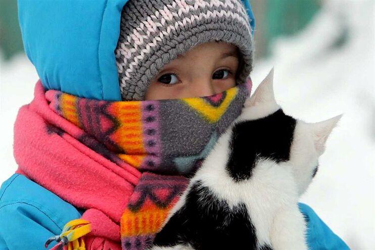 Seis conselhos para proteger os seus animais do frio