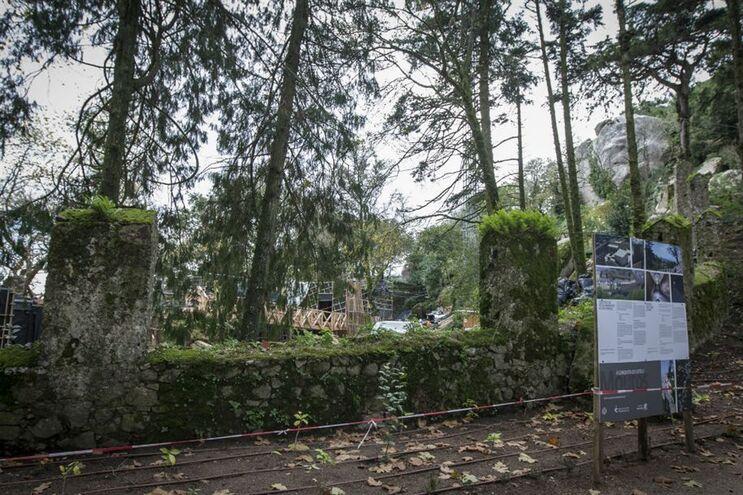 Plano prevê o abate de 1400 árvores na zona do Parque Natural Sintra Cascais