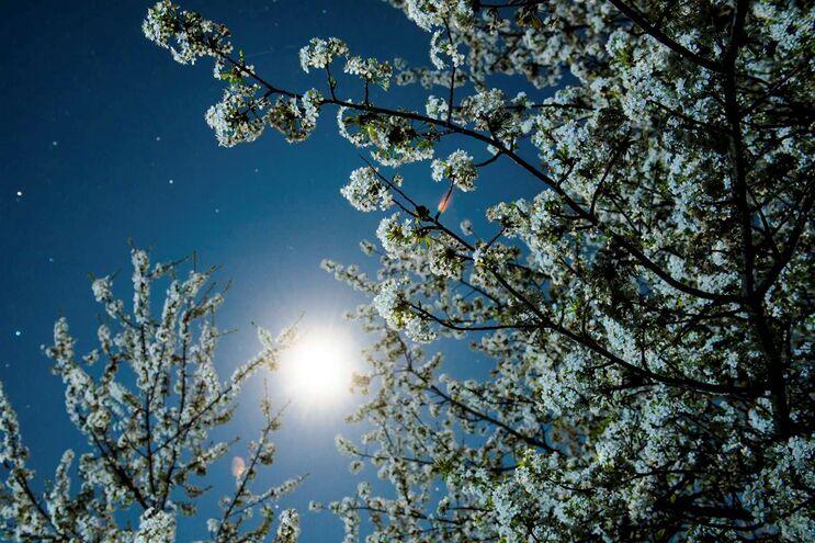 Alerta vai para os pólenes de árvores como o pinheiro, plátano, carvalho, bétula e cipreste