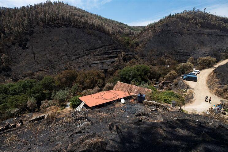 Na Quinta da Fonte, em Pedrógão Gaande, tudo ardeu à volta, menos as árvores autóctones plantadas há